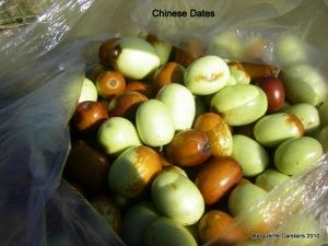 chinese dates
