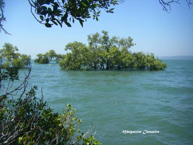 High tide Mangroves