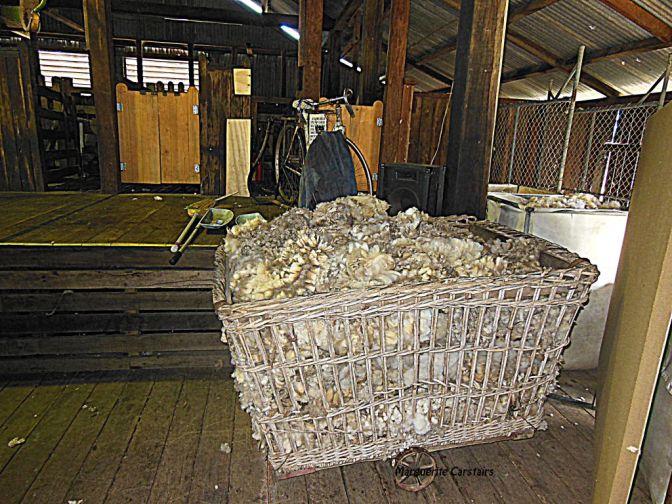 woolbasket