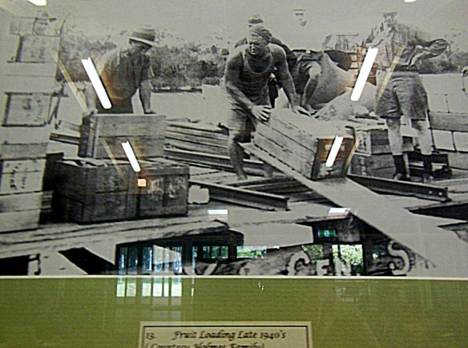 Fruit loading 1940s