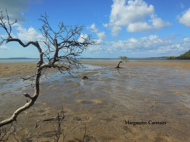 Mangrove at Low tide