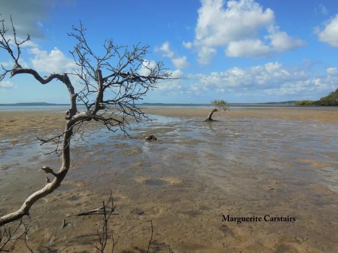 Mangrove at Low tide