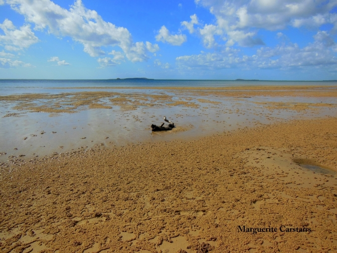 Soldier Crab droppings low tide Fraser Island