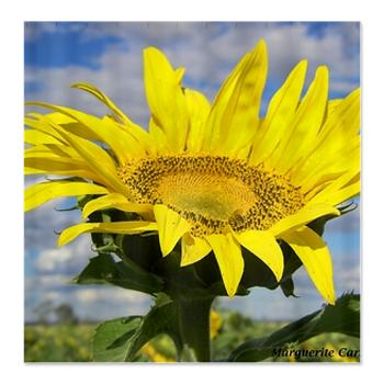 sunflower_shower_curtain