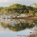Mangroves on the Wetlands….Southern Moreton Bay Islands