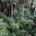 Mount Tambourine Queensland