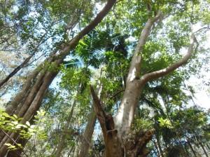 Overhead canopy