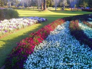 Floral Beds