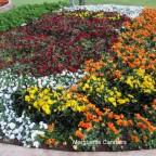 Toowoomba Flower Show… Laurel Bank Park