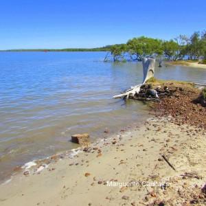 Sandy Beach Stump