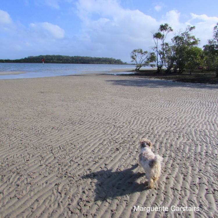 Sandy Beach Wally