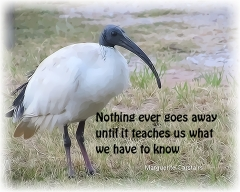 Nothing ever goes away until it teaches us what we have to know