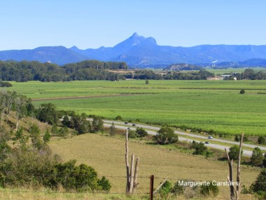 View from Tweed Valley