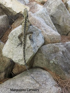 Water dragon on the Rocks below
