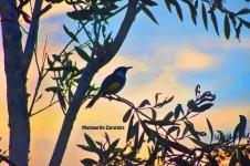 Suset Bird2