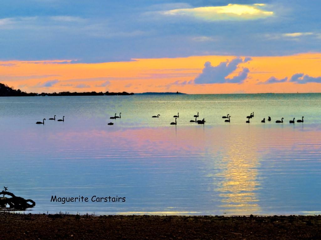 Moreton Bay Wetlands