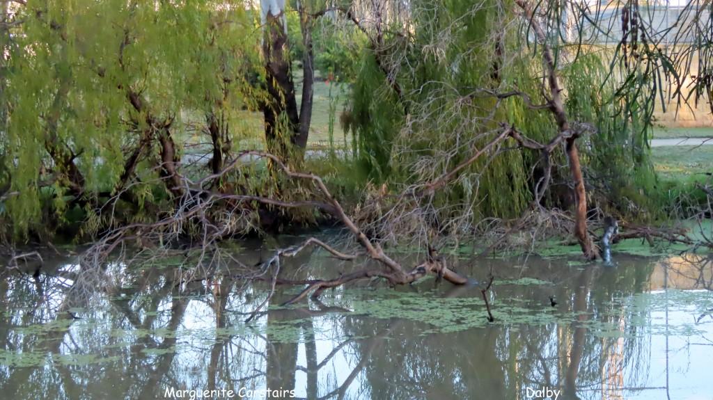 River Walk at Dalby